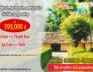 HCM đi Thanh Hóa giá chỉ 799k, vé đang mở tại Easybooking.vn